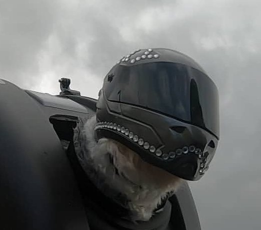 I've altered many of these.  I believe Milly is the first dog in the world to wear comfortably a functional full face motorcycle helmet.
